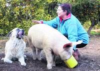 «Mi mascota es un cerdo»