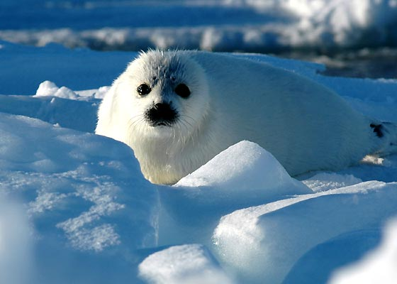 focas bebes!