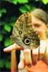 El parque de las mariposas