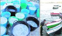 El Aula del Mar logra criar chanquetes en cautividad
