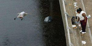 Los Muertos Por El Huracan Katrina No Bajara De 10 000 Segun Un