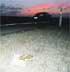 Los atropellos acaban con las lechuzas en el campo de Cartagena