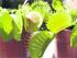 Las plantas carnívoras
