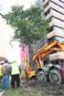 Trasladan un árbol afectado por la L9