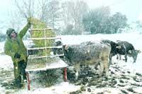 El frío, la lluvia y la nieve seguirán hasta el martes