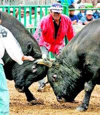 Una corrida sin torero