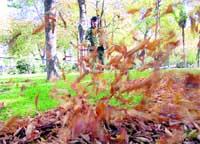 Tareas de otoño en el parque del Retiro