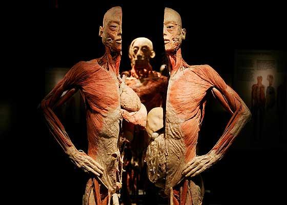 El cuerpo humano es unico