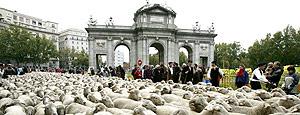 ovejas Madrid