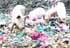 'Parque temático' para los marranos en China