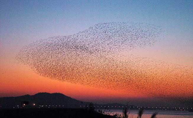 251105 - patos. Esa masa de la imagen son patos, pasan sobre el río Kumkang en Kunsan, al sur de Seul, su destino es Siberia, Rusia, donde pasarán el resto del invierno.