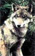 80 familias de lobos perviven en Galicia, un tercio del total español