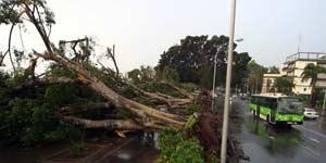 Tenerife tormenta Delta