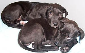 cachorritas
