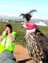 Falcons 'caçaocells' a Reus