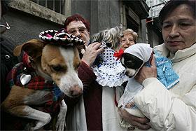 San Antón bendición animales