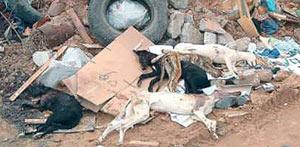 50.000 galgos son asesinados todos los años en España  (Imagen: galgosinfronteras.org)