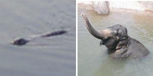 nessy elefante dilema