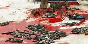 325.000 focas serán asesinadas en esta cacería. (Reuters)