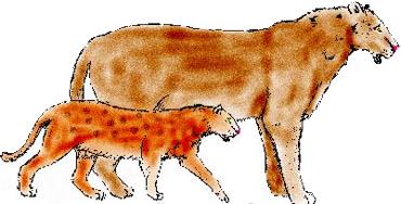 Dos ejemplares de tigre dientes de sable.