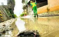 Cacas y ratas flotan en   El Esparragal por la lluvia