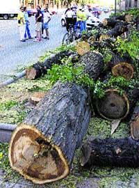 Muchos árboles han caído por la M-30.