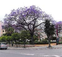 La Málaga de