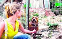 Adoptan animales para vigilar huertos ilegales en el Carmel