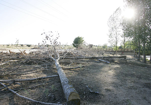 Talas masivas en la Choera del arroyo Viñuelas