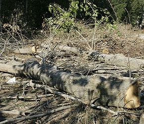 Los ecologistas denuncian falta de atención por parte de las autoridades