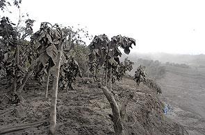 Tras la erupción del Tungurahua, la vegetación quedó cubierta de cenizas. (José Jácome / EFE)