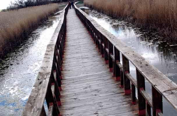 Una de las pasarelas que cruzan los humedales del Parque Nacional de Las Tablas de Daimiel.