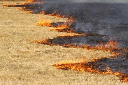 Los causantes de los fuegos tienen perfiles muy variados. (X. Rey / Efe)
