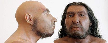 Reconstrucciones de craneos del Neandertal.