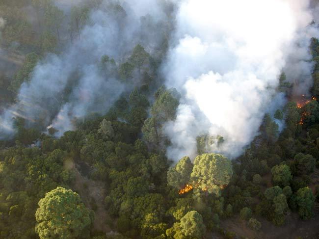 Incendio forestal en El Hierro