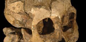 Calavera de la niña fósil hallada en Etiopía