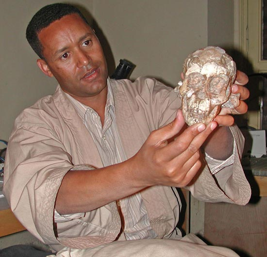 Calavera de un Australopithecus afarensis de tres años