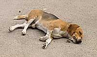 El 'Beagle' murió en el acto. (Canal 9)