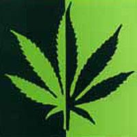 La marihuana, buena para el cerebro.