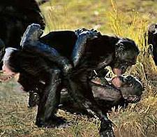 Monos bisexuales