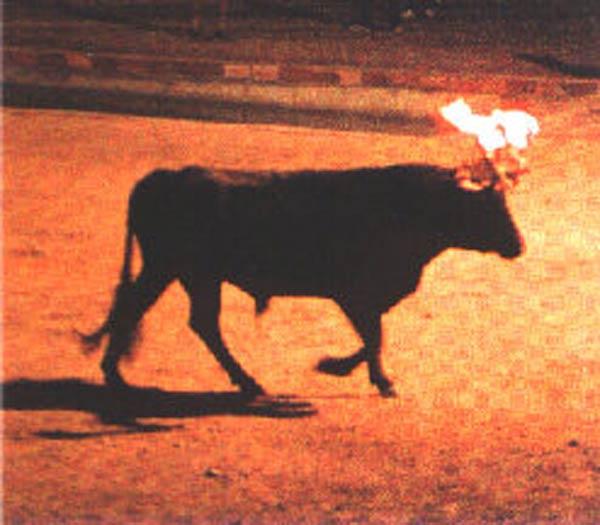 La fiestas tradicionales y las corridas de toros, excluidas de la propuesta de la fiscalía