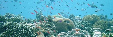 Reserva marina de Papúa, Nueva Guinea