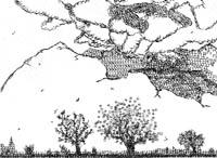 paisajes tecleados