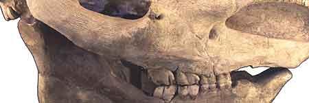 Los restos arqueológicos han sido encontrados gracias a la ampliación