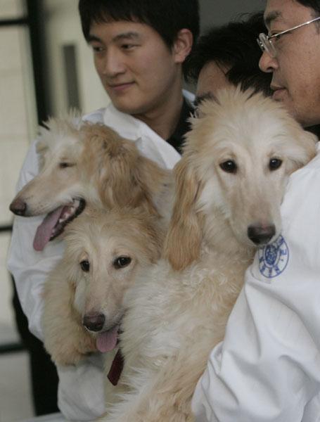 Primera clonación de una perra: se llama Bona.