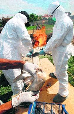 Gripe aviar en Indonesia