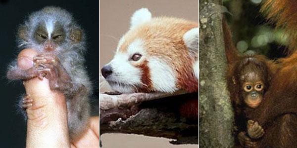 Algunos de los animales incluídos en la lista de la ZSL