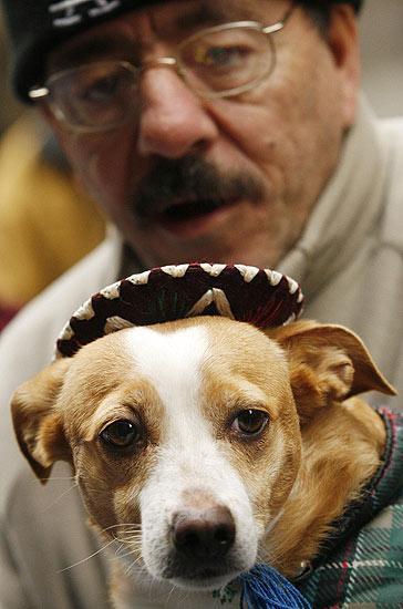 Día de San Antón. Un perrito tocado con un sombrerito de mariachi, a las afueras de San Antón.