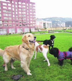 Reclaman zonas para soltar al perro sin que les multen