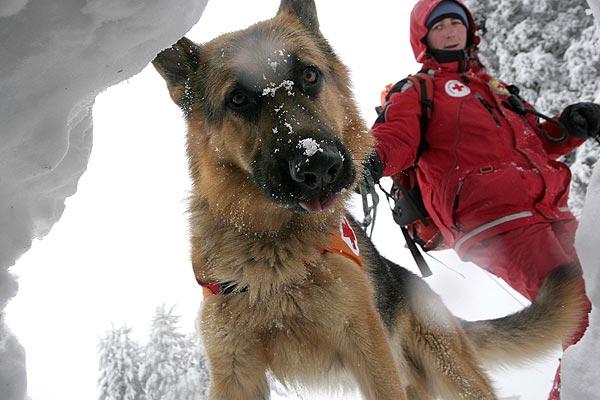 250107 Perro rescatista. Al rescate. Un rescatista de montaña y su perro se entrenan en las montañas de Vitosha, cerca de Sofía.